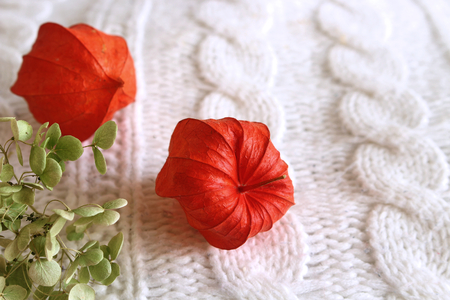 Autumn composition. Orange physalis on a white fabric background. Flat lay, top view. Greeting card style. Place for text.