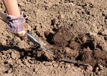 Arbeitender Bauer im Garten, organischer Dünger zur Düngung des Bodens, Vorbereitung des Feldes für die Bepflanzung im Frühjahr, Biolandbau oder Herbstgartenkonzept. Standard-Bild