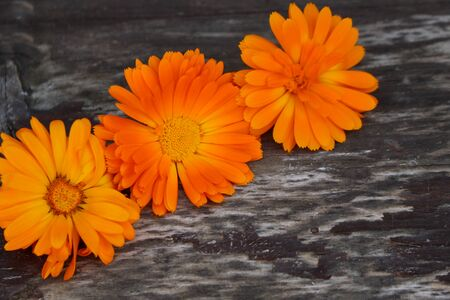 Closeup Calendula officinalis ,pot marigold, ruddles, common marigold on a wood background with space for text. Medicinal herb. Preparation for drying. Standard-Bild - 129250011