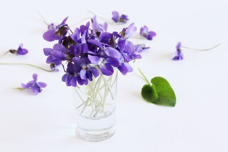 A beautiful spring bouquet, viola odorata flowers on a wooden white background. Minimalist. Beautiful spring wildflowers, flowers composition.