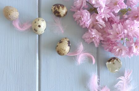 Welcome Spring! Happy Easter! Easter, spring greeting card, invitation with quail eggs, pink sakura and pink decorative feather on blue wood table. Feminine styled stock flat lay photo, top view 免版税图像