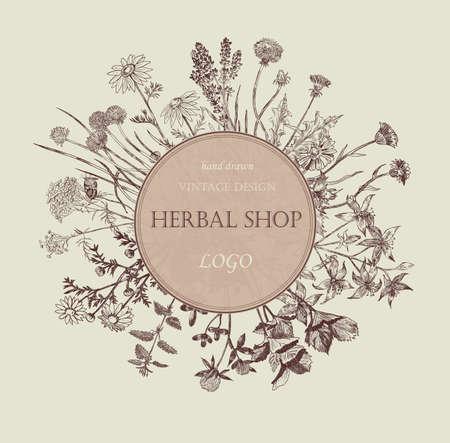 calendula: Herbal shop logo. Hand drawn design. Vector