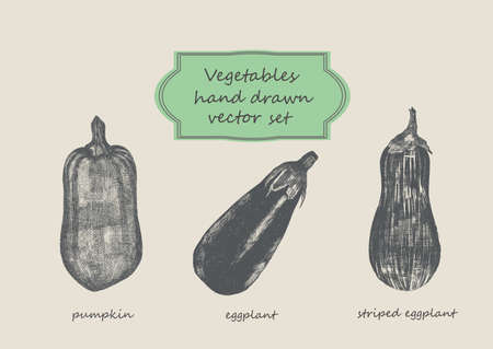 egg plant: Vegetables set. Beijing cabbage, califlower, cabbage Hand dawn vector