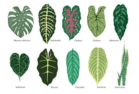 Exotic leaves vector set. Color.