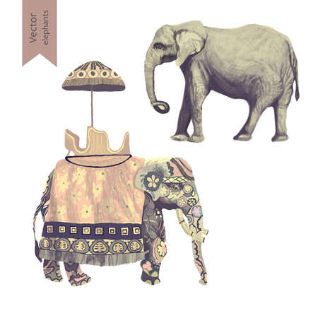 illustraion: Indian elephants illustrations set. Isolated on white. Vector