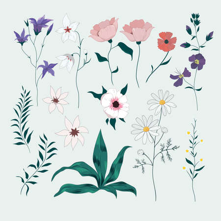 Vector set with wild meadow flowers. Isolated collection 일러스트