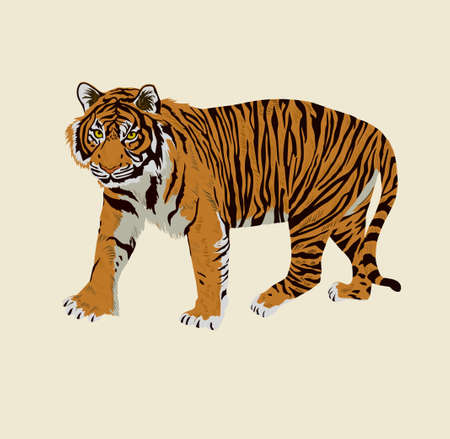 Sumatrian endangerd tiger watercolor illustration hand drawn 일러스트