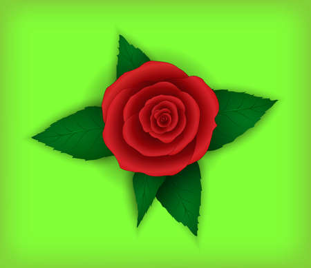 bourgeon: Flower rose on a light green background. Illustration