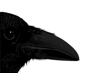 don: Profile raven black bird isolated Illustration