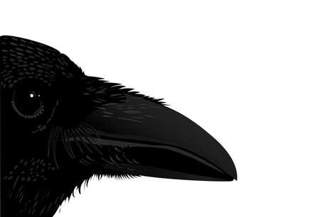 toltec: Profile raven black bird isolated Illustration