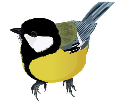 agile: Titmouse drawing. Colorful isolated bird.