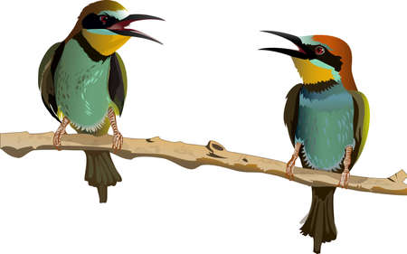 two birds: Two birds with bright plumage sitting on a branch and talk Illustration