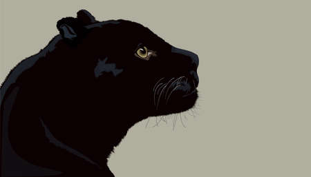 black panther: Black panther isolated vector graphic Illustration