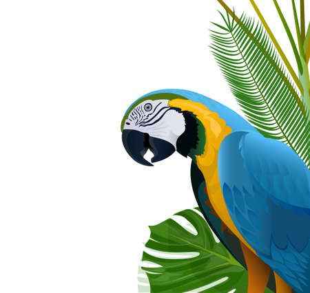 parrot tail: Blue parrot on a background of tropical vegetation Illustration