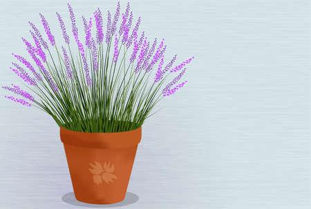 fragrant: Lavender potted plant
