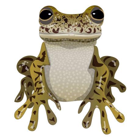 Frog portrait isolated amphibian spotty