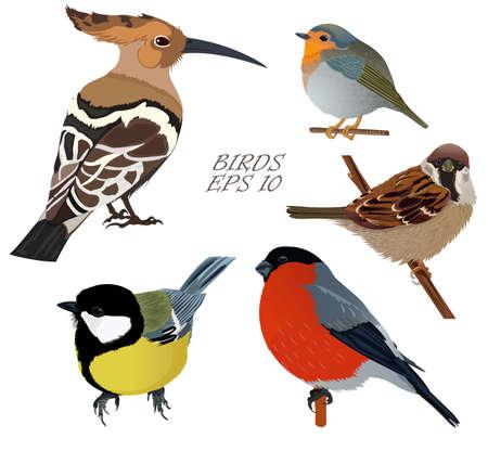 Set of birds sparrow bullfinch hoopoe titmouse