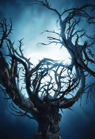 spooky forest: big mystic halloween tree at night with fog in moon light