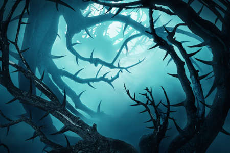 thorny: dark forest with thorny bushes in green fog at night