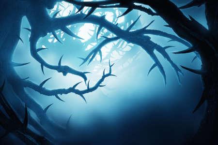 forrest: dark mystic forest in fog at night in blue light