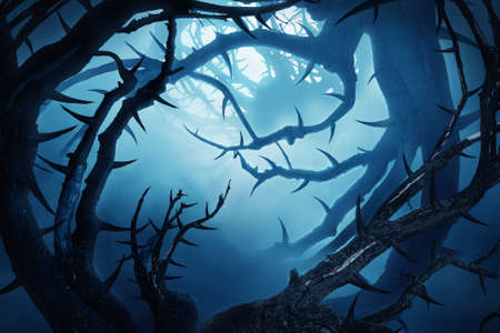 forrest: dark forest with thorny bushes at night