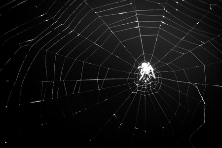 Spider silhouette spins at spider net, at night, closeup, black and white. Scary spider crawls on a spider web, Halloween theme, macro.
