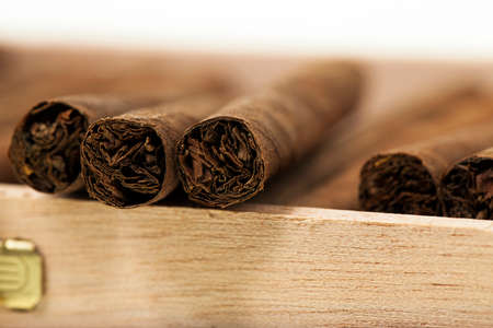 cheroot: cigars lying in a box. small depth of sharpness
