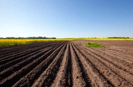 農業畑。栽培菜種の近く。青い空。 写真素材