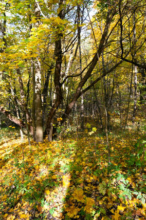 the trees growing in the territory of the wood   in an autumn season photo
