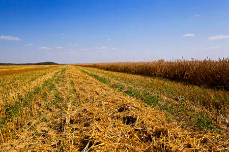 carry out: an agricultural field on which carry out wheat cleaning