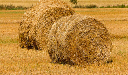 remained: the photographed stack of the straw which has remained after the harvest company of wheat