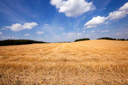 gamme de produit: un champ agricole sur laquelle il passa la soci�t� de r�colte du bl� Banque d'images