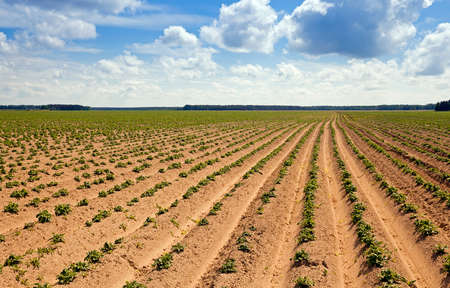 non cultivated land: plowed agricultural field, which grows potatoes. Blue sky.