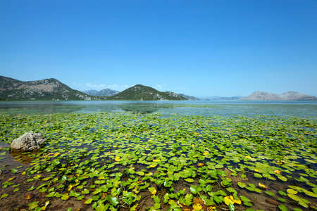 Lake Skadar located in Montenegro in summertime of year 스톡 콘텐츠