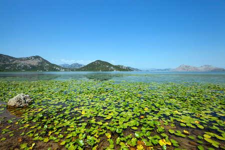 Lake Skadar located in Montenegro in summertime of year 版權商用圖片