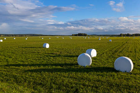 mechanization: the grass packed into bales for feeding animal in a winter season Stock Photo