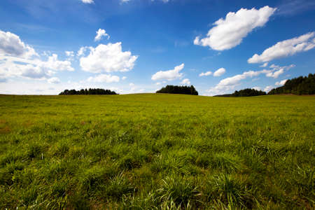non cultivated land: an agricultural field on which grows green unripe cereals