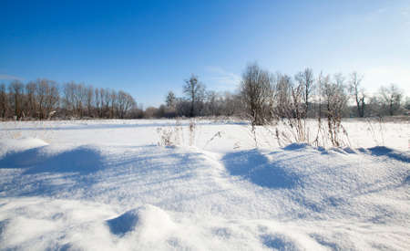 ski traces: the agricultural field covered with snow in a winter season