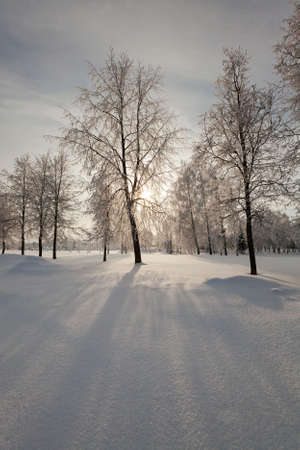 wintery day: trees covered with snow. in winter season Stock Photo
