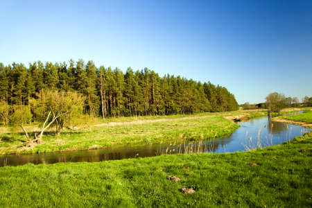 small river: a small river in the summer. Belarus