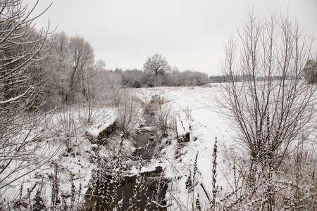 h�tte schnee: die B�ume wachsen im Wald in einer Wintersaison