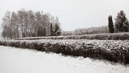 schneeberg: the trees growing in the wood in a winter season Stock Photo