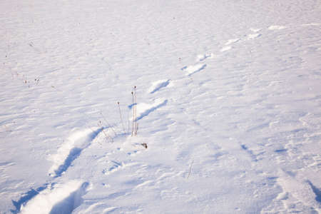 remained: traces from last person, remained on snow
