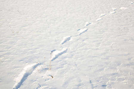 remained: the traces of the person photographed by a close up which remained on snow