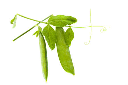 vietnamse: isolated on a white background pea sprout