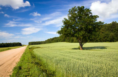time of year: rural road in the summer time year
