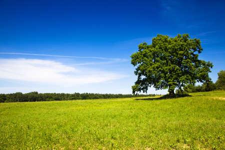 tree growing in a field in summer