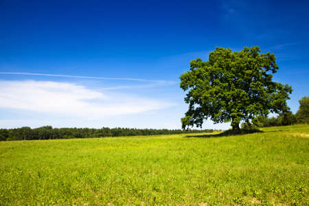 green hills: tree growing in a field in summer