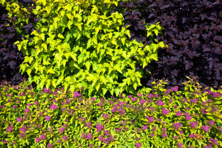 growing together: various bushes of plants growing together. spring season