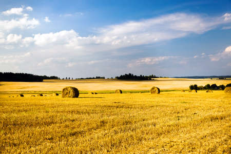 tillage: field, on which grow grain during harvest company
